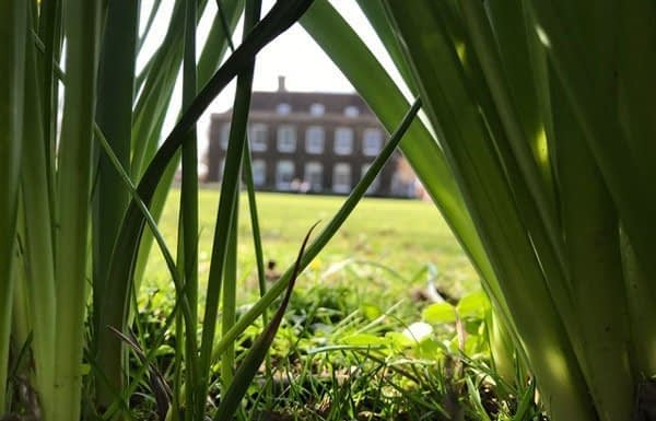 Bugs-View-Spring-Grove-School-Wye